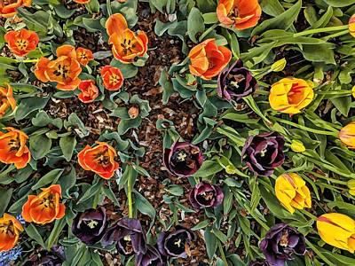 Photograph - Tulip Tops by Cameron Dixon