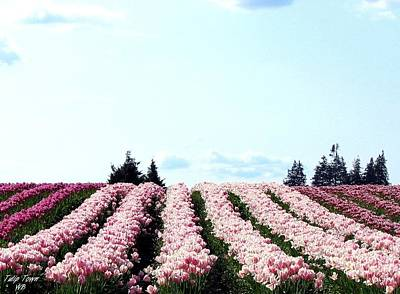 Photograph - Tulip Town 10 by Will Borden