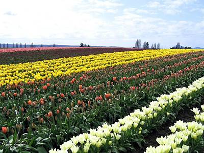 Photograph - Tulip Town 11 by Will Borden