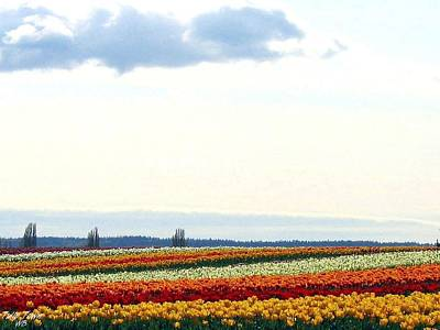 Multihued Photograph - Tulip Town 13 by Will Borden
