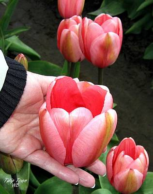 Photograph - Tulip Town 15 by Will Borden