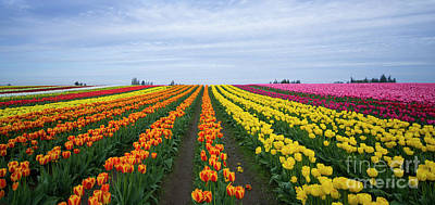 Photograph - Tulip Town 2 by Louise Magno