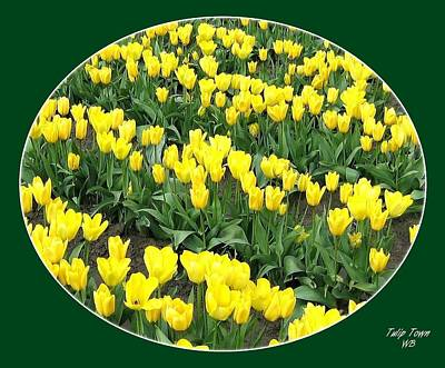 Photograph - Tulip Town 2 by Will Borden