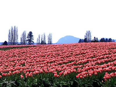 Photograph - Tulip Town 3 by Will Borden