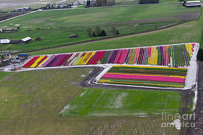 Photograph - Tulip Town Aerial by Louise Magno