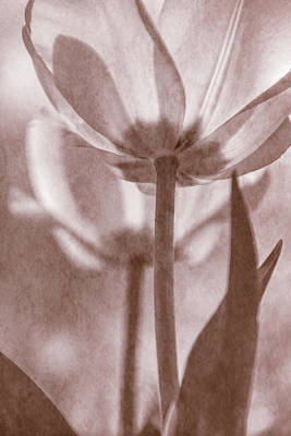 Photograph - Tulip Transparency II by Leda Robertson