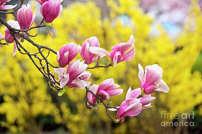 Photograph - Tulip Tree Iv by Karen Jorstad