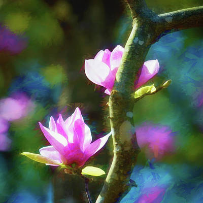 Photograph - Tulip Tree by James Barber