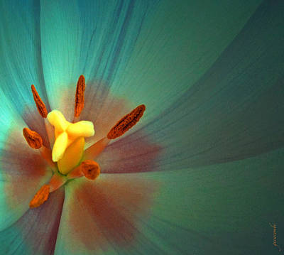 Art Print featuring the photograph Tulip Trends by Gwyn Newcombe