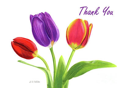 Pinks And Purple Petals Drawing - Tulip Trio- Thank You Cards by Sarah Batalka