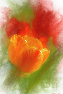 Abstract Flowers Royalty-Free and Rights-Managed Images - Tulip by Veikko Suikkanen