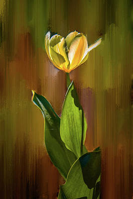 Photograph - Tulip White Yellow Petals #h5 by Leif Sohlman