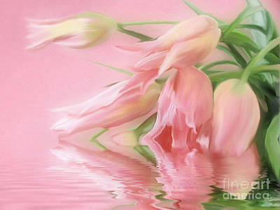 Art Print featuring the photograph Tulip Wish by Elaine Manley