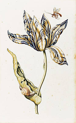 Tulip Drawing - Tulip With Snails And Insects by Dutch School
