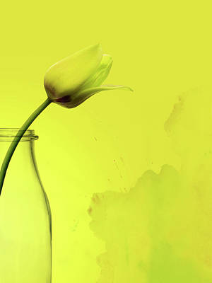 Tulip Yellow Art Print by Mark Rogan
