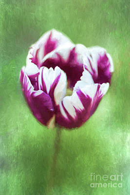 Digital Art - Tulip Rems Favourite Aka Zurel by Liz Leyden