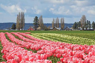 Tulips 10 Original by Julius Reque