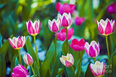 Photograph - Tulips 2 by David Zanzinger