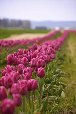 Tulips 2 Original by Julius Reque