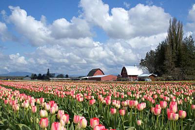 Tulips 5 Original by Julius Reque