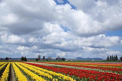 Tulips 6 Original by Julius Reque