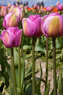 Tulips 8 Original by Julius Reque