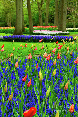 Photograph - Tulips And Bluebells by Anastasy Yarmolovich