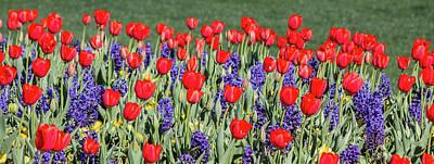 Photograph - Tulips And Hyacinth by Teresa Wilson