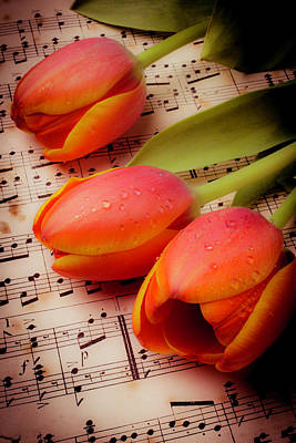 Old Sheet Music Photograph - Tulips And Music Notes by Garry Gay