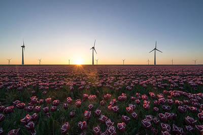 Flevoland Photograph - Tulips And Windmills by Roelof Nijholt