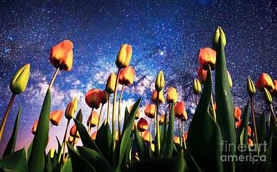 Tulips At Night Art Print by Sebastien Coell