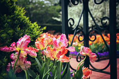 Tulips At The Garden Gate Art Print by Jessica Jenney