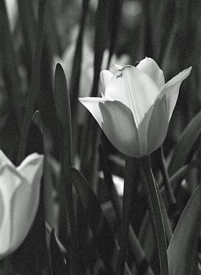 Photograph - Tulips - Beauty In Bloom - Bw Infrared Sfx 13 by Pamela Critchlow