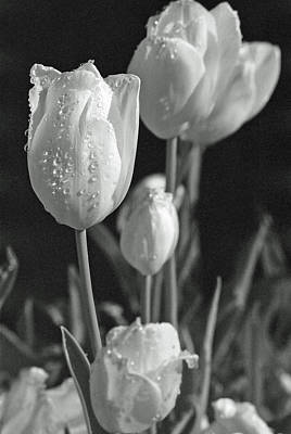 Photograph - Tulips - Beauty In Bloom - Bw Infrared Sfx 15 by Pamela Critchlow