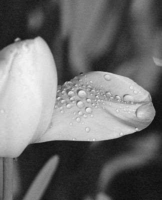 Photograph - Tulips - Beauty In Bloom - Bw Infrared Sfx 17 by Pamela Critchlow