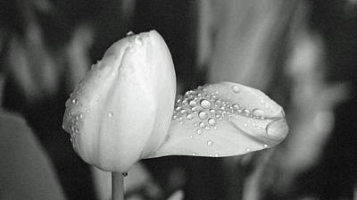 Photograph - Tulips - Beauty In Bloom - Bw Infrared Sfx 19 by Pamela Critchlow