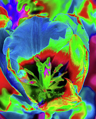 Photograph - Tulips - Beauty In Bloom - Photopower 3416 by Pamela Critchlow