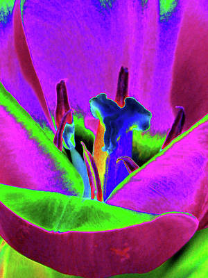 Photograph - Tulips - Beauty In Bloom - Photopower 3418 by Pamela Critchlow