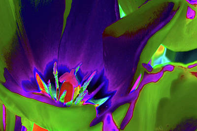 Photograph - Tulips - Beauty In Bloom - Photopower 3429 by Pamela Critchlow