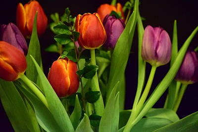Photograph - Tulips by Bonnie Bruno