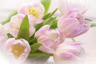 Photograph - Tulips Bouquet by Delphimages Photo Creations