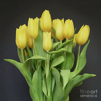 Photograph - Tulips By The Dozen  by Ann Horn