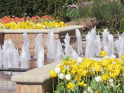 Photograph - Tulips By The Fountain by Kathie Chicoine