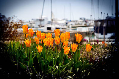 Tulips By The Harbor Art Print