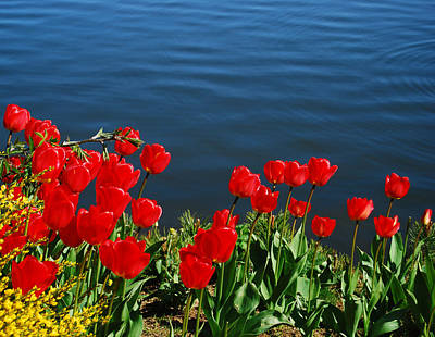 Photograph - Tulips By The Pond by Marilynne Bull