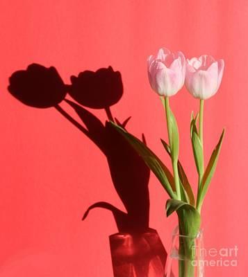Tulips Casting Shadows Art Print