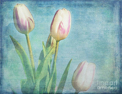 Photograph - Tulips Day by Jutta Maria Pusl
