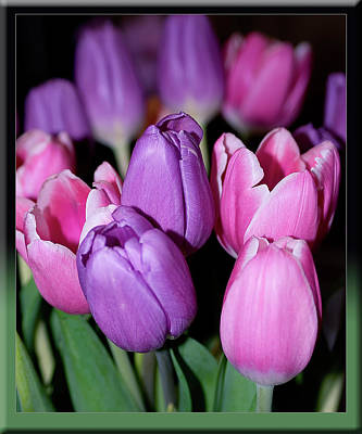Photograph - Tulips by Debby Richards