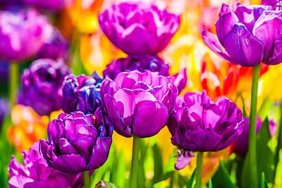 Tulips Enchanting 05 Art Print by Alexander Senin