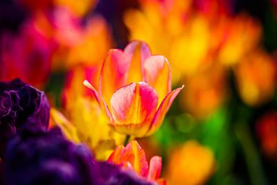 Tulips Enchanting 15 Art Print by Alexander Senin